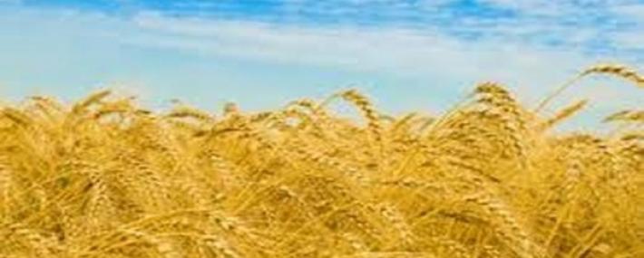Затишие на пазара на земеделски земи