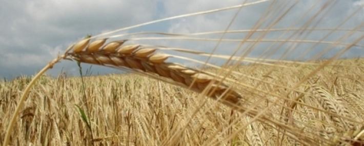 Спад в цените на земеделската земя в Ловешко