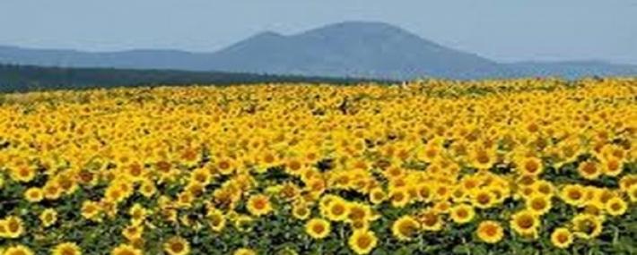 Пазар на земеделските земи в Община Русе- обзор за 2019г